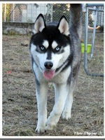 Maïko (11 mois)