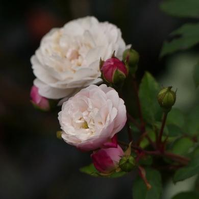 Octobre roses...