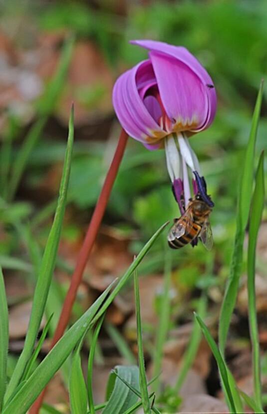 Insectes-papillons-5-4061.jpg