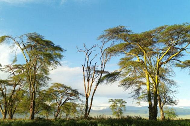 Tanzanie, la saison sèche