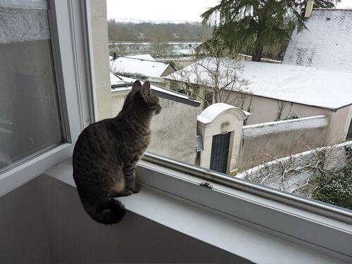 14 - Les chats et moi