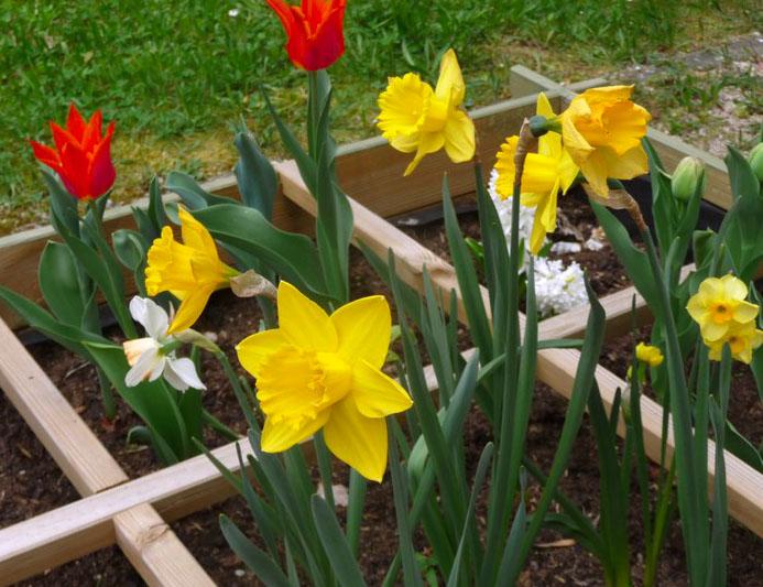 jardin ulis segpa lutterbach