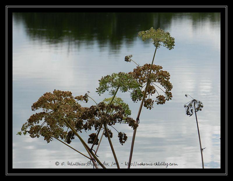 Autour des étangs de Lognes (Seine et Marne)