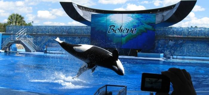 7 Raisons De Ne Pas Visiter Les Delphinariums -