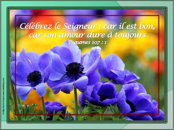 Célébrez le Seigneur - Psaumes 107 : 1