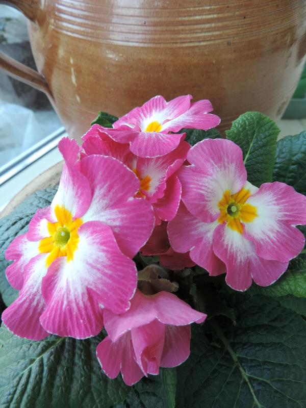 Fleurs de février...