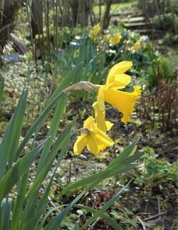 Balade de printemps