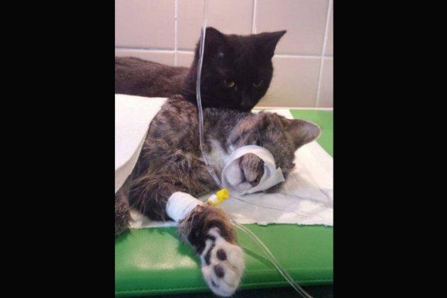 Les internautes craquent pour le chat infirmier