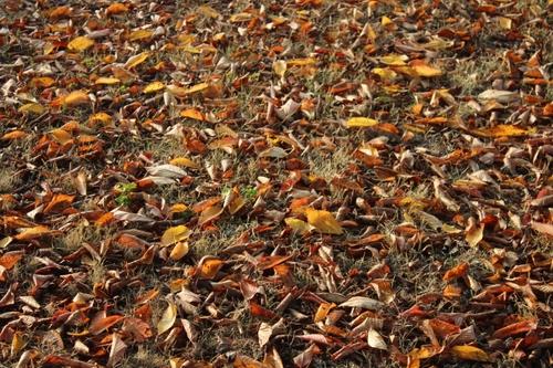 Scènes d'automne