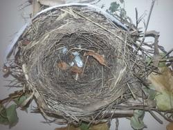 """Construction du """"nid douillet"""" de Nidou"""
