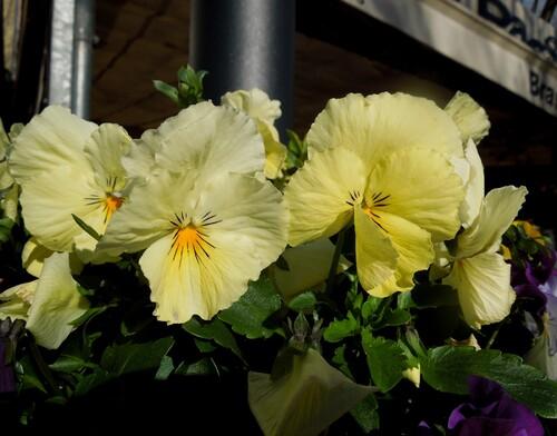 Des fleurs en janvier
