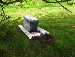 abeilles et ruche