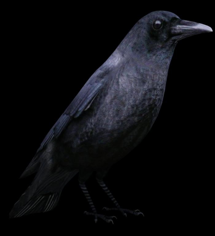 Tube de corbeau (image-poser-render)