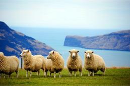 https://www.cheval-daventure.com/ch/images/OCEANIE/NOUVELLE-ZELANDE/CA_New_Zeland_sud_03.jpg