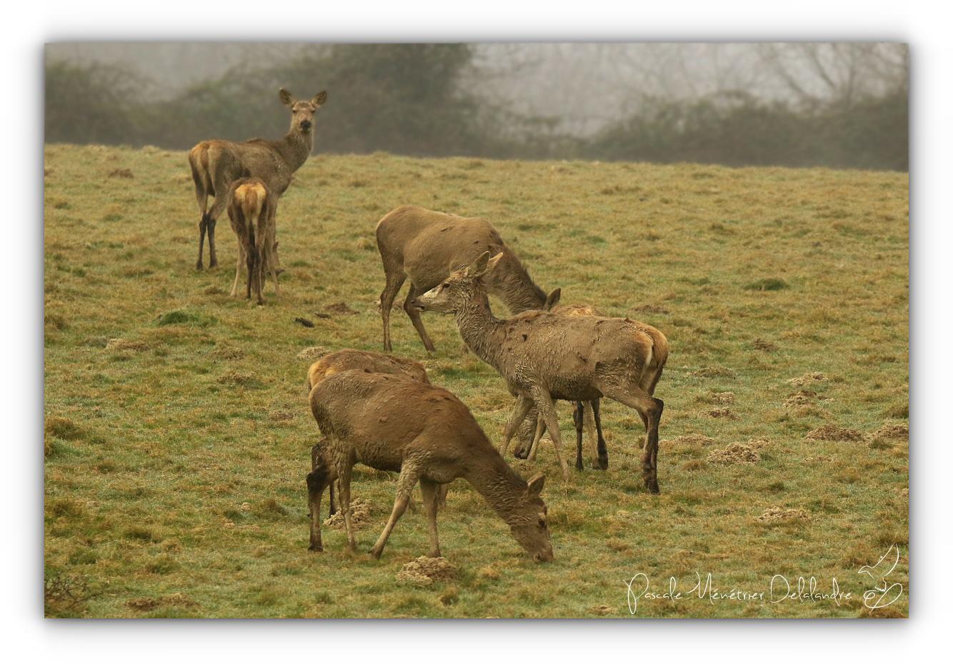 Beauté sereine dans un léger brouillard