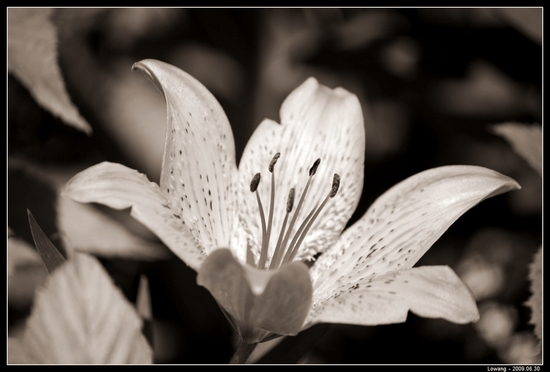 Fleur_NoirEtBlanc_Fab