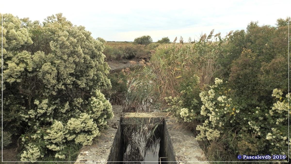 Plaines du Teich et domaine de Fleury - Octobre 2016 - 4/13