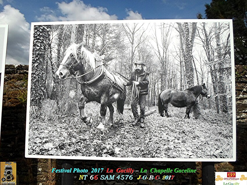 FESTIVAL PHOTO LA GACILLY # GLENAC # LA CHAPELLE GACELINE   3/4     D     20/06/2017
