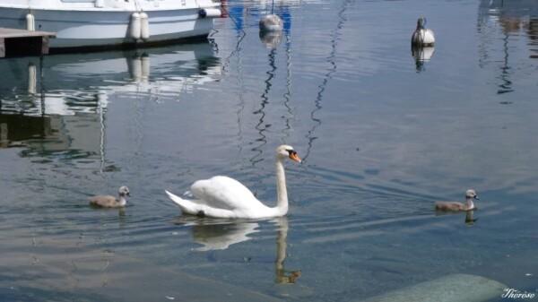 Yvoire, faune et flore lac léman (7)