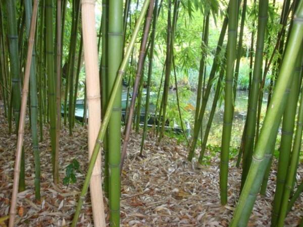 Giverny, le jardin de Monet 5