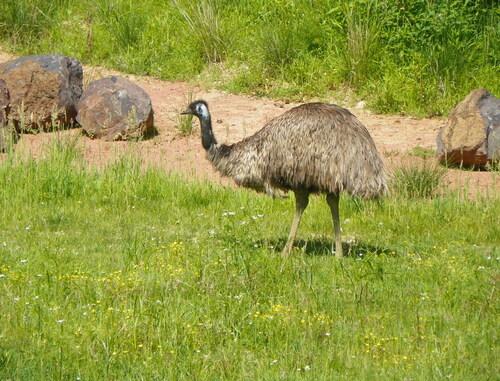 Le Parc des Oiseaux à Villars-les-Dombes ( 4 )