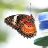 Attiré par le nectar
