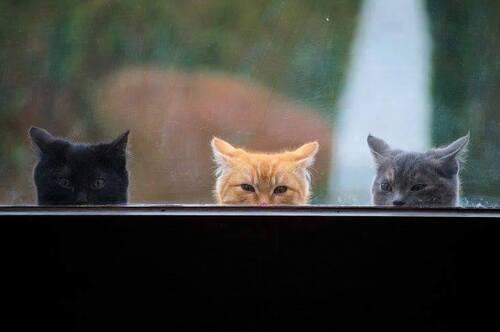 les chats à la fenêtre