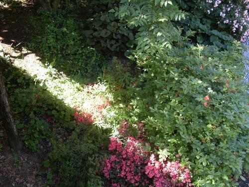 nouvelle floraison