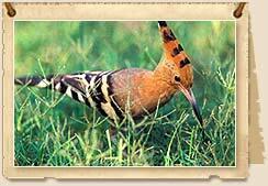 Sanctuaire D'Oiseau De Bharatpur