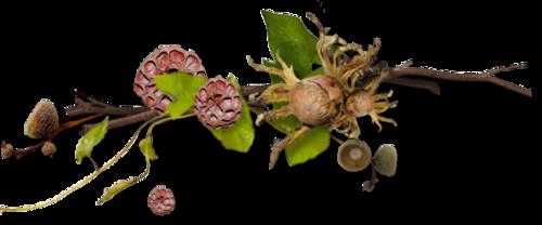 Fleurs cultivées : Delphinium