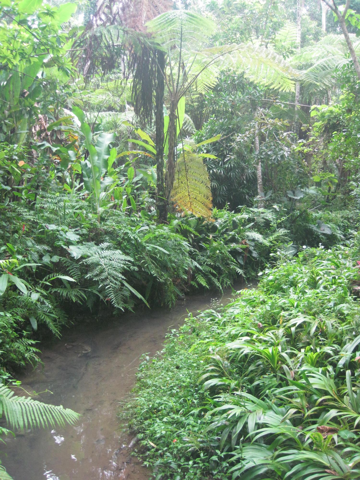 Le jardin botanique d 39 ubud le de bali sable mouvant for Les jardins de bali