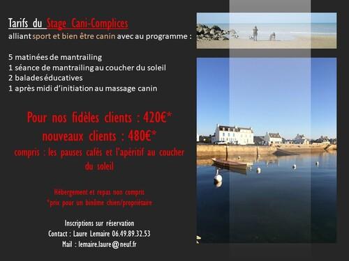 mantrailing en Bretagne
