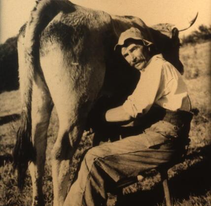 13 - La traite des vaches, suite