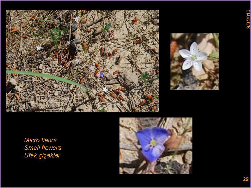 HERBARIUM - GARDENS - ORCHARDS - FRUIT FOREST