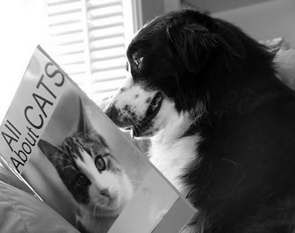 Le chien intelligent