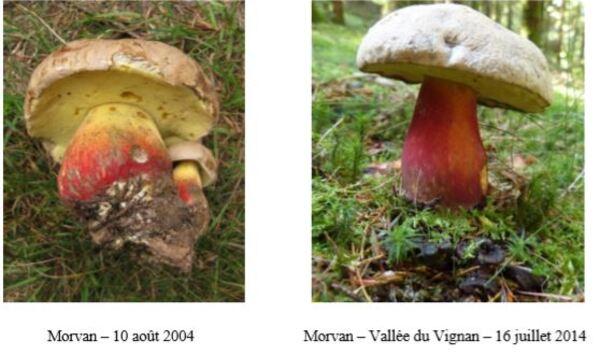 Une récolte mycologique inédite en forêt domaniale de Châtillon