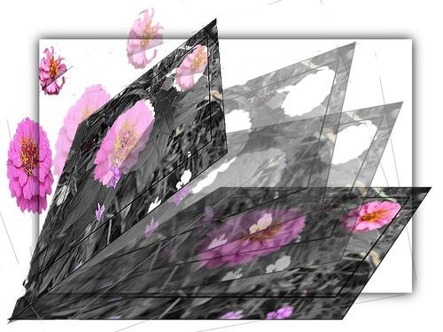 Une pluie de fleurs