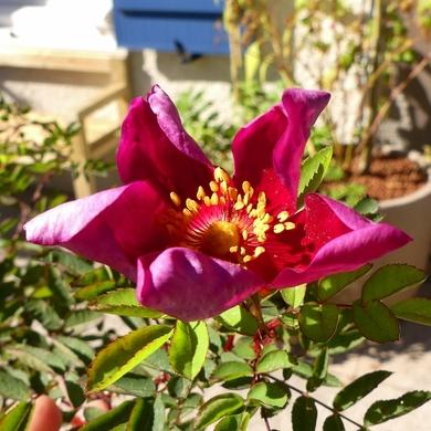 Pépinières et plantes d'exception 2016 : mes achats...