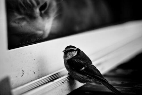 10 - Chats à la fenêtre encore... et encore