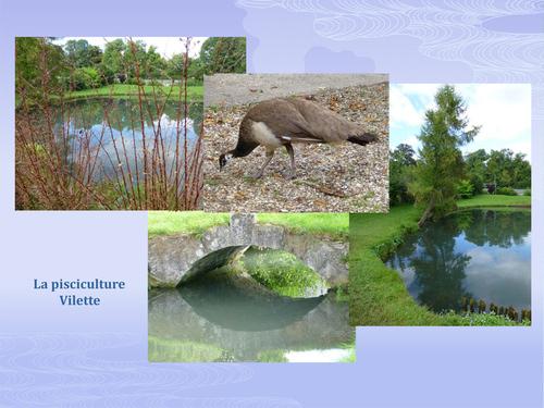 Ferme du logis et pisciculture de Vilette