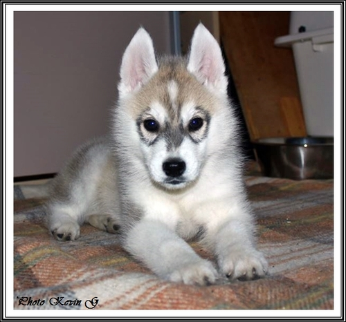 Javik (2 mois)