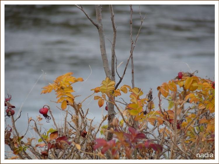 Photos prises au début de novembre.