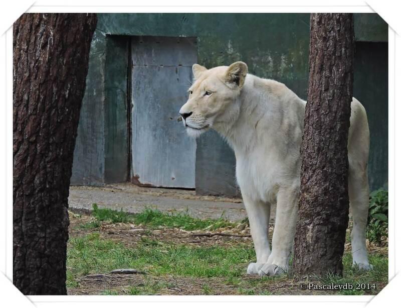 Zoo du Bassin d'Arcachon à La Teste de Buch - 12/20