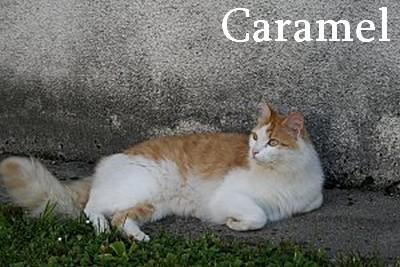 caramel-3.jpg