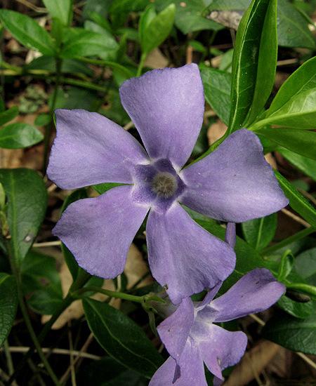 bleue05