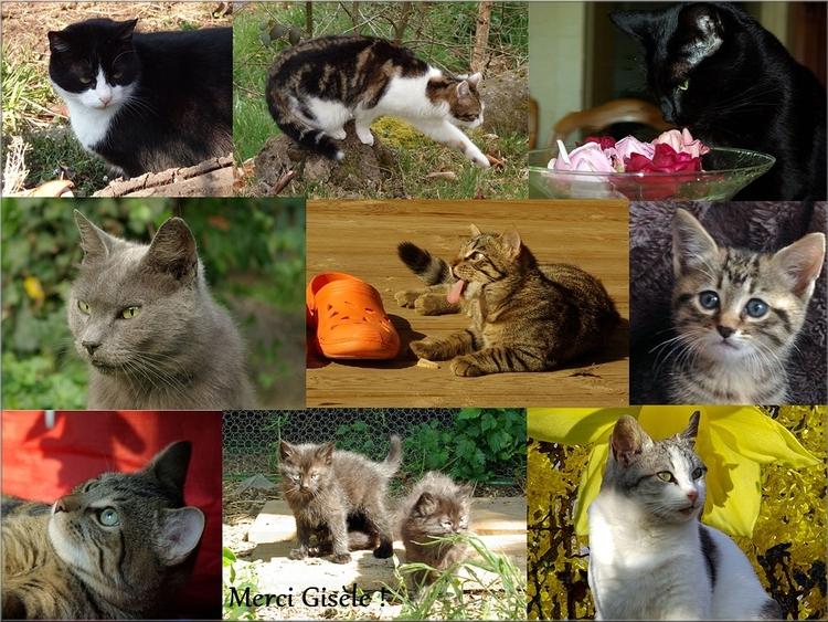 Photokado de chats  - Merci Gisèle !