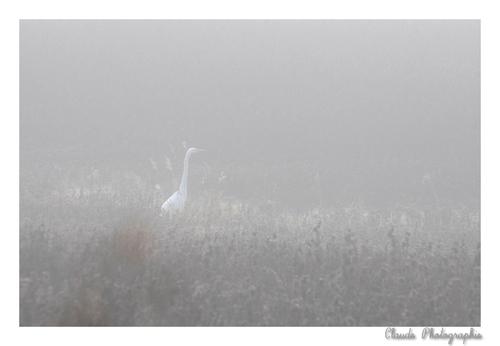Perdue dans le Brouillard