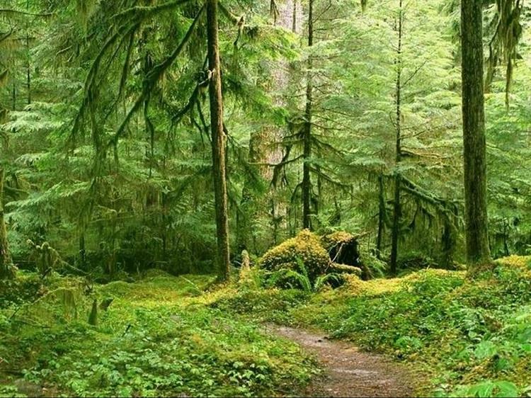 Images du monde : Balade en forêt