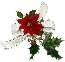 """Etoile de Noël"" ..."