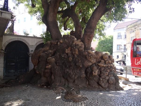 Autres participations au Café Thé n° 115 - Au pied de mon arbre...